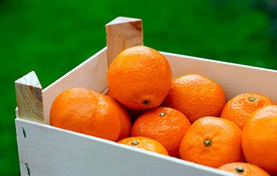 Bio-Orangen in der Kiste