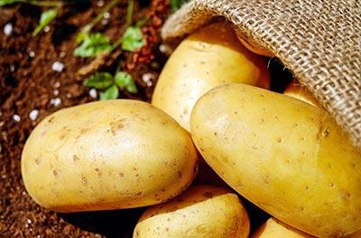 Bio-Kartoffeln vom Hof