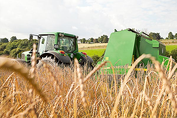 Bio-Getreideanbau