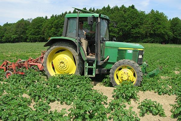 Ernte unserer Bio-Kartoffeln